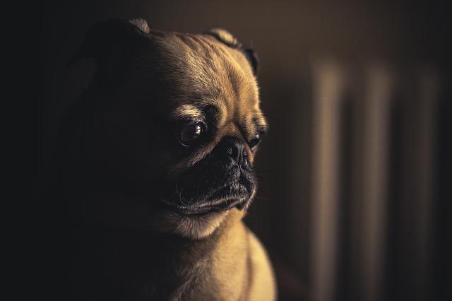 Sad Puppy Is Sad